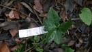 jardin de fondcombe, étiquetage 005 w-02