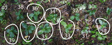 plants-coréen-29-40