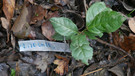 jardin de fondcombe, étiquetage 065 w-02