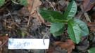 jardin de fondcombe, étiquetage 080 w-02