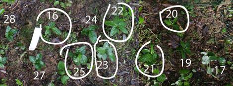plants-coréen-17-28