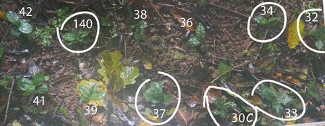 plants-japonais-30 C 32-42.jpg