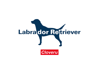 Labrador・Retriever with Cloveru limited collaboration