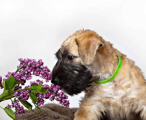 Dog Smells Flowers.jpg
