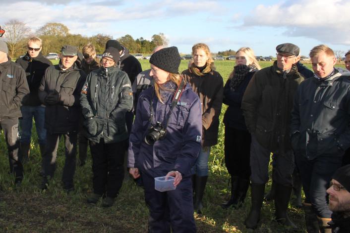 FRDK tilbyder PløjefriUngeKlub samt ERFA gruppe i grovfoder