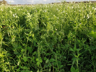 shopFRDK har gennemsigtige priser ved salg af frø til efterafgrøder