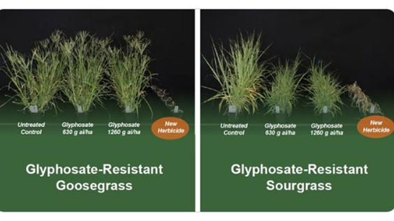 Bayer har et nyt herbicid molekyle