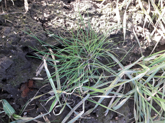 Bayer: Hold øje med græsserne, det våde efterår har fået konsekvenser