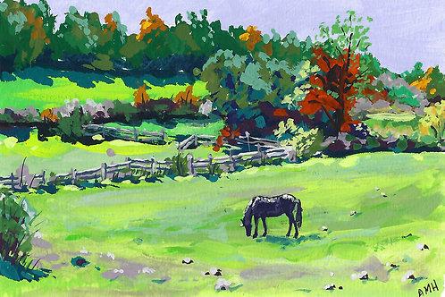 Townsend Horse Farm, Bolton