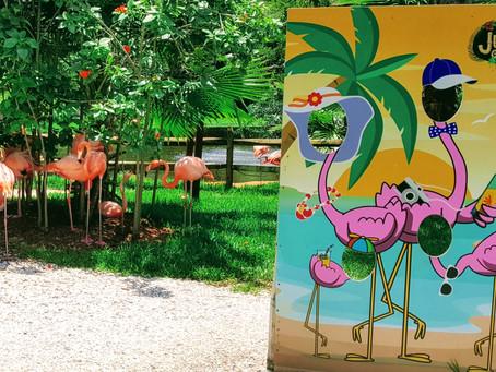 Flamingos In Our Backyard