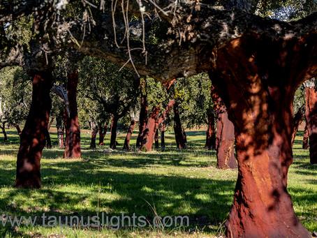 Extremadura III - Frühlingshaftes
