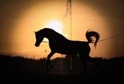 Beautiful silhouette at Al Ghanayim Stud