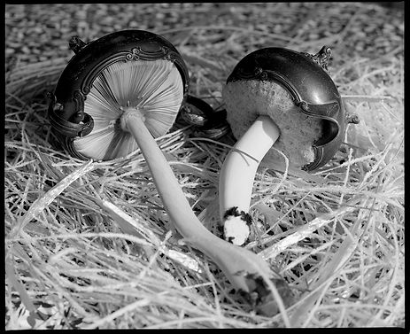 creamer and sugar, memorialization as mushroom ID image