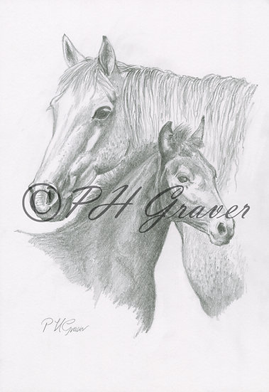 HAF#27 Mare And Foal Pencil Drawing