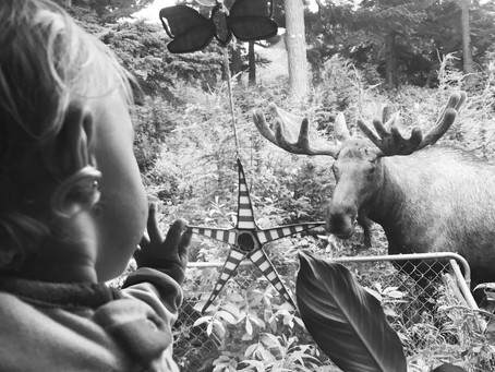 Goodnight Moose