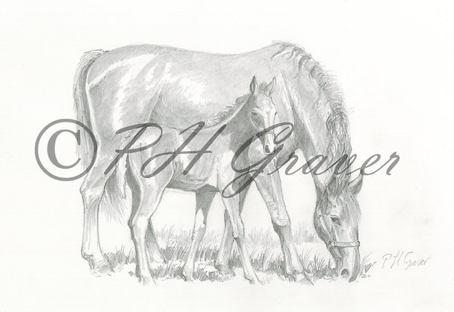 HAF#25 Mare And Foal Grazing Pencil Drawing