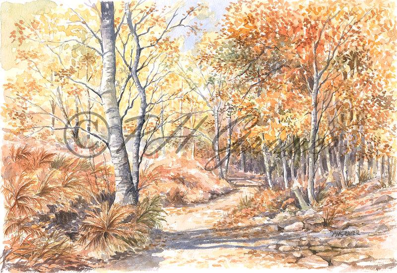 WS#02 Autumn Tints