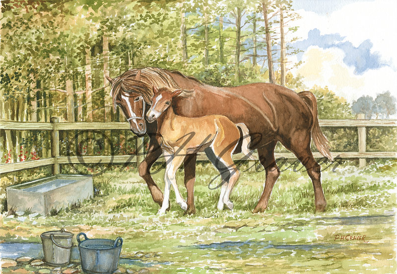 HAF#08 Mare And Foal By Water Trough