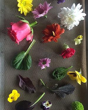 fiori essiccati.jpg