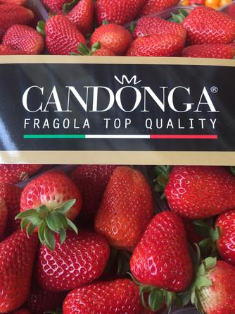 Candonga il top delle fragole