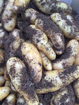 Le patate ratte...  strane.. ma buone