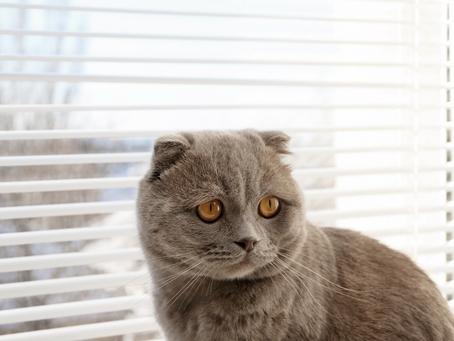 Como identificar sinais de catarata em cães e gatos