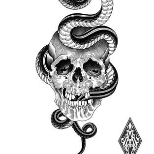 Snake skull.jpg
