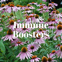 Immune Boosters.jpg
