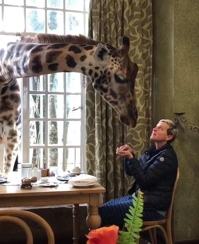 Ellen DeGeneres and Portia De Rossi stay at Giraffe Manor in Kenya before heading to the Dian Fossey Gorilla Fund