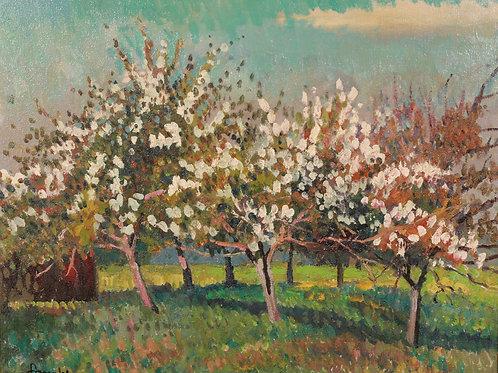 Albert Malet Garden in bloom