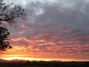 sunset tree.jpg