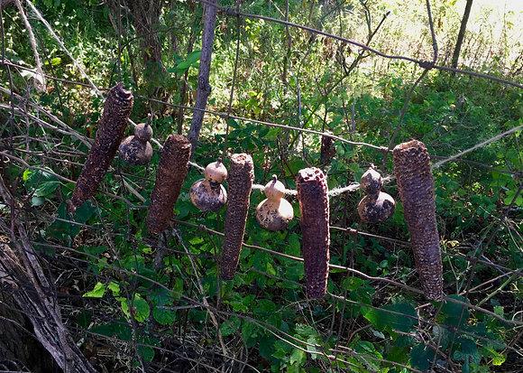 """""""Kentucky Harvest Gourds & Corn Cobs"""""""