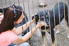 chica-voluntaria-guarderia-perros-refugi