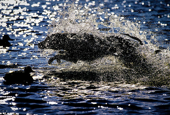 Splash_Rhythm.jpg