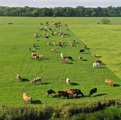 Happy cows equals a happy farm