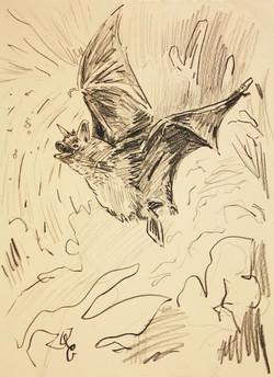 Bat_1.jpg