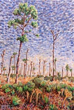 Pine Flats
