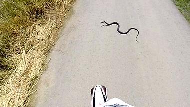 Cyprus Black Whip Snake