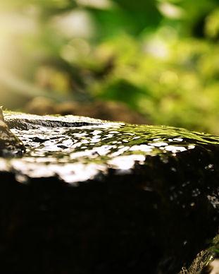 blur-calm-close-up-268022.jpg