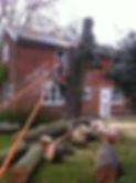 Tree removal Dedham, Essex