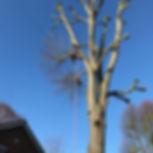 Tree pollard Colchester