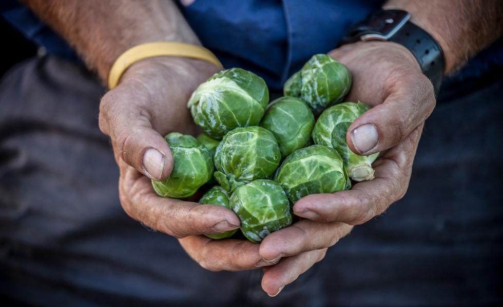 Eastbrook Vegetable Farm