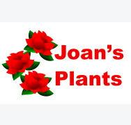 Joans Plants.jpg