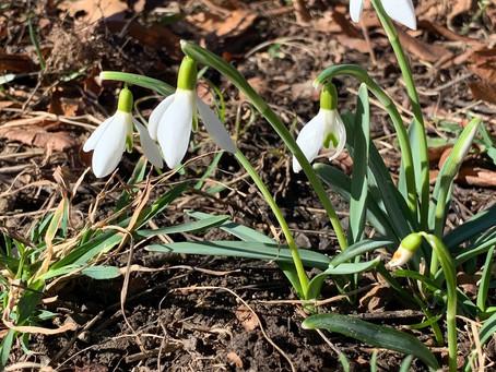 Wird es schon Frühling?