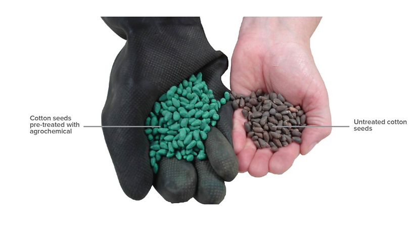 treated vs untreated cotton seeds.png