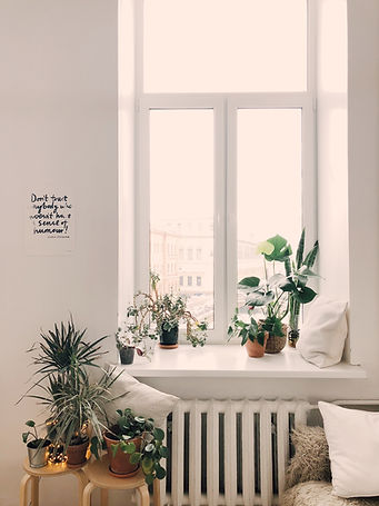 Canva - Photo of Green Leaf Potted Plant