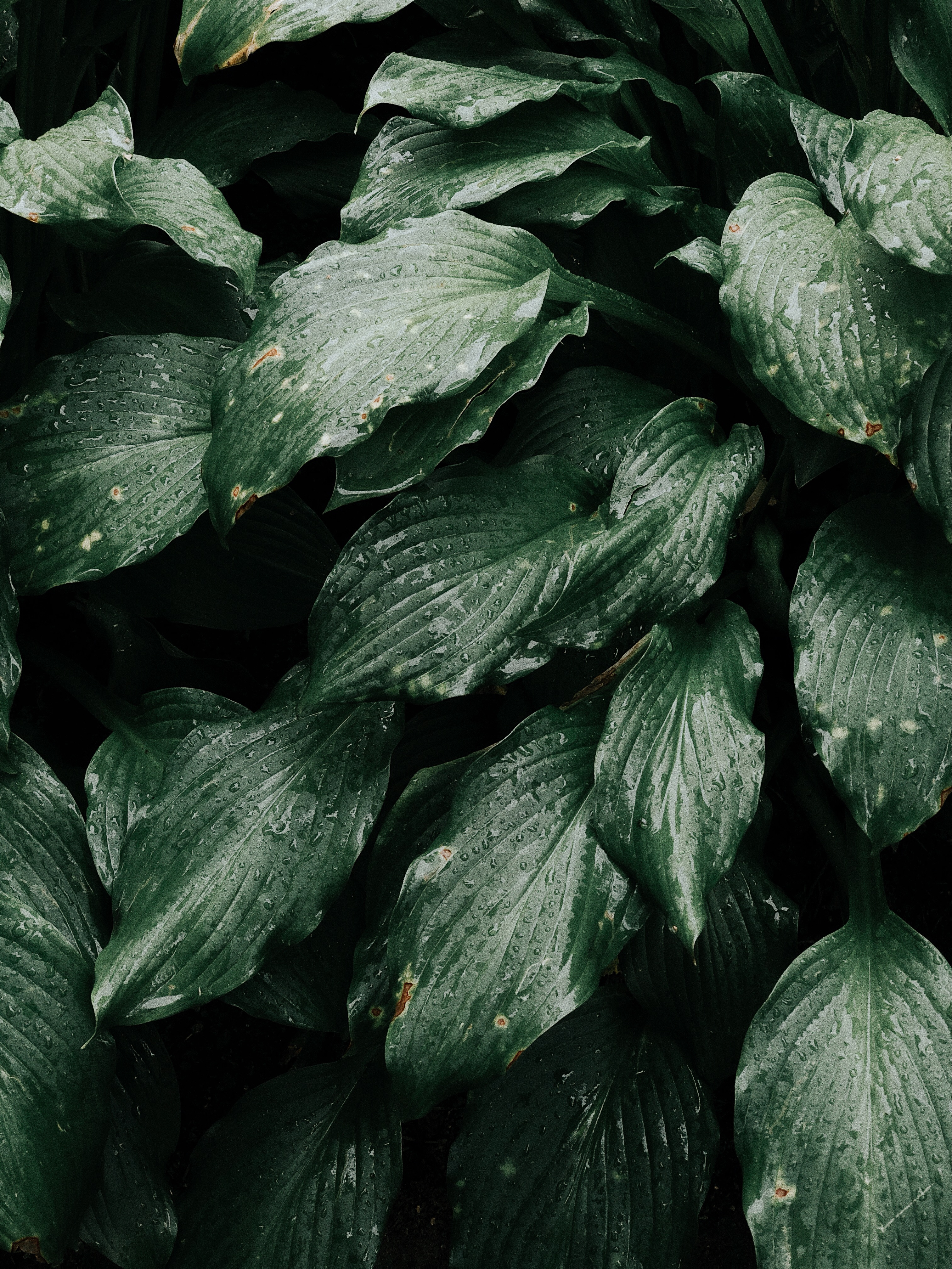 Canva - Close-up Photo of Green Leafy Pl