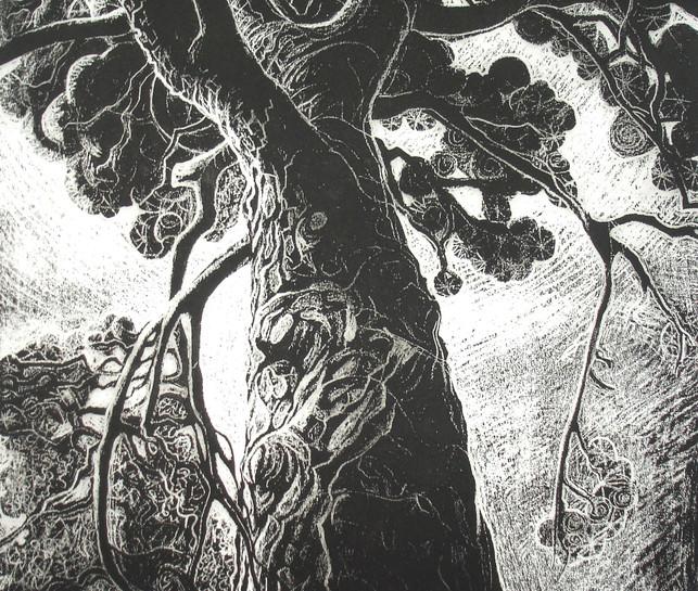 'Scots Pine, Culzean'