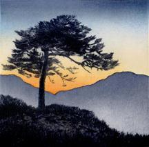 High Pine lV