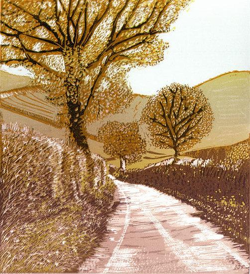 Walking to Colstey Wood